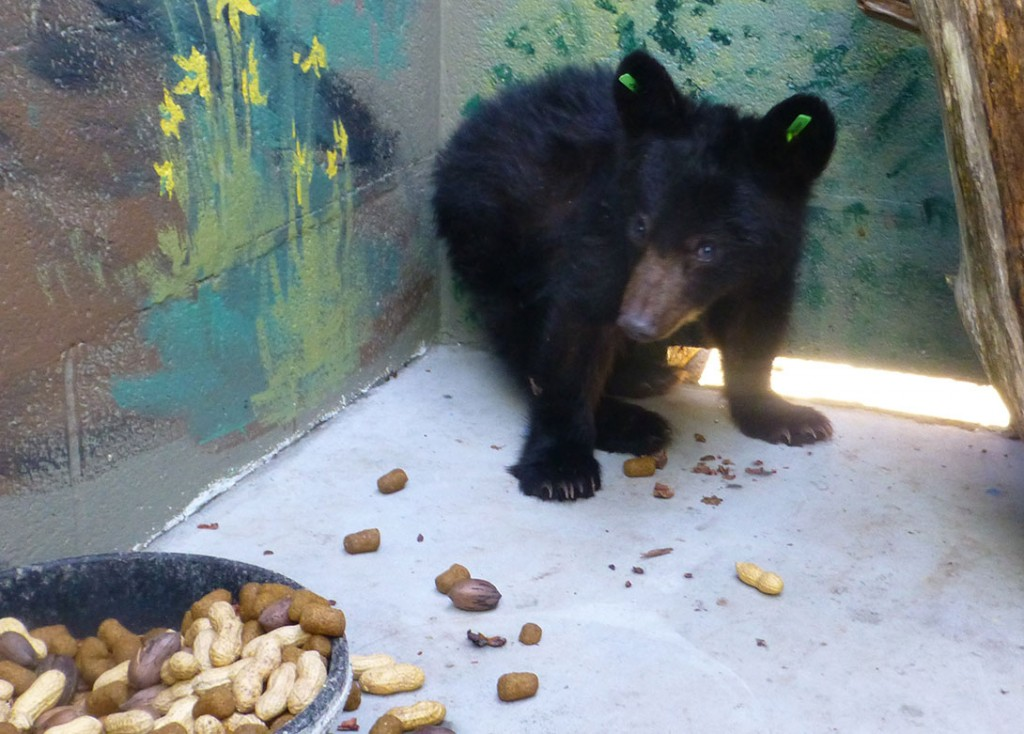 Black chubby bears — photo 9